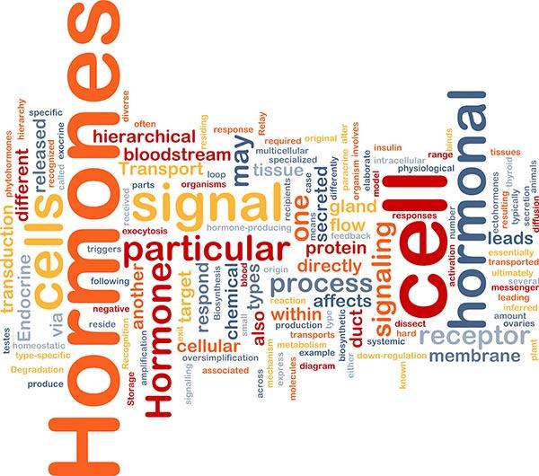 hormone words